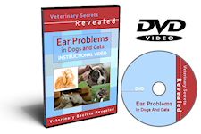 Dog inner ear infection